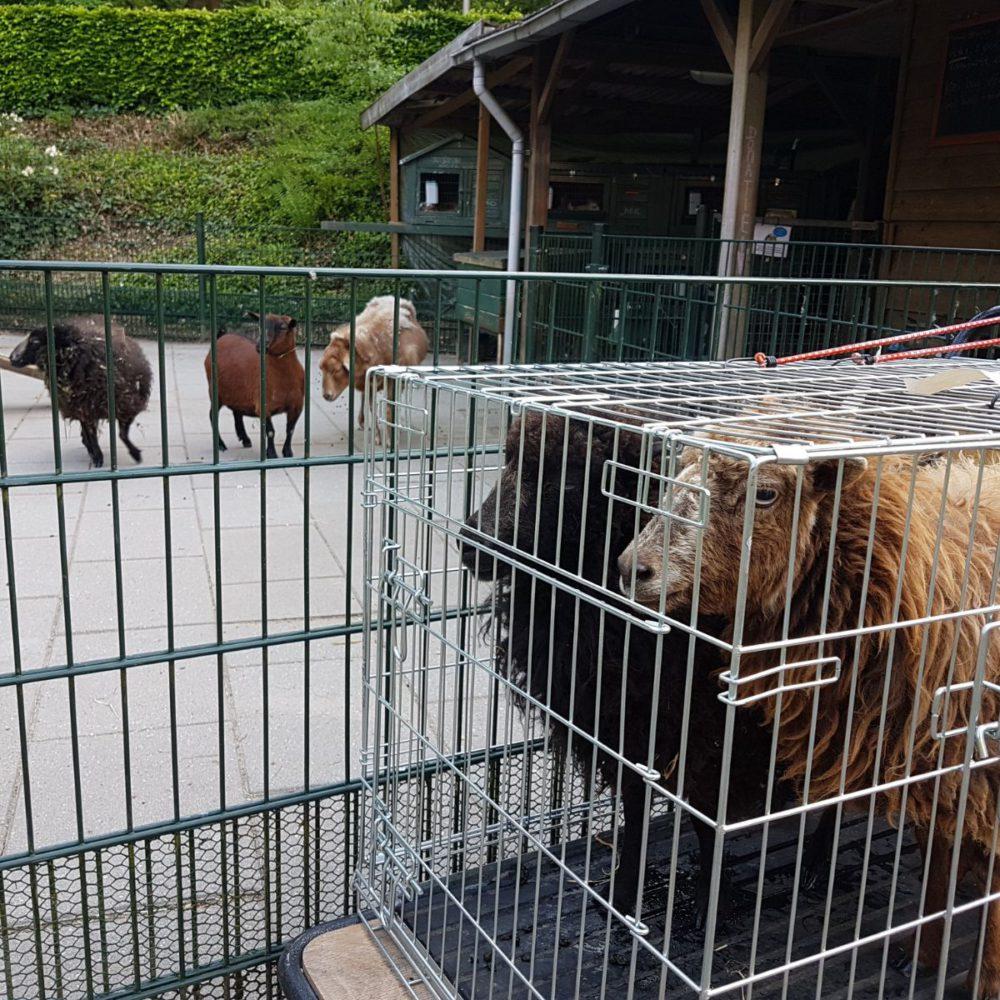 Nieuwe bewoners in de Dierenweide van de Lichtenberg!